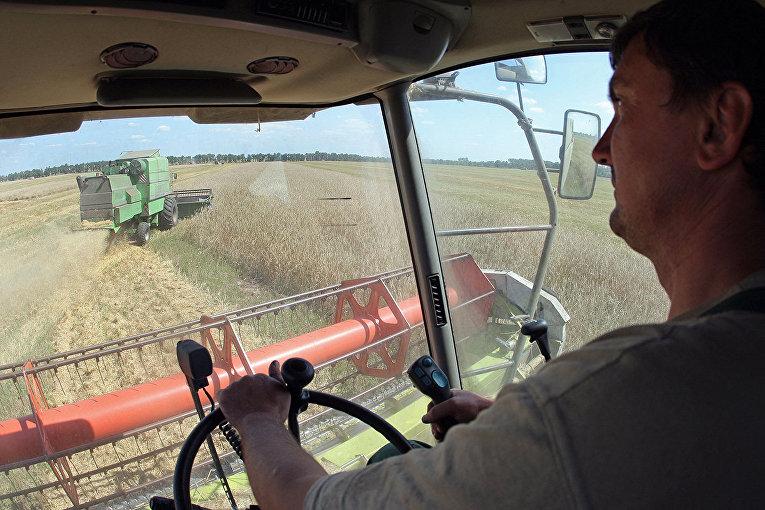 Сбор урожая зерна в Черниговской области, Украина
