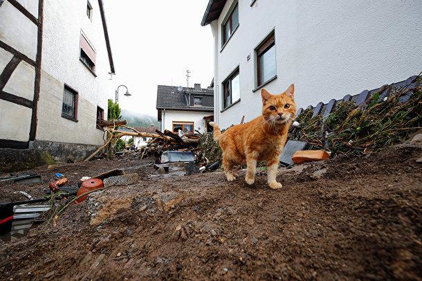 Кошка гуляет рядом с мусором, принесенным наводнением в Шульде