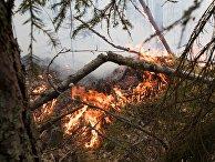 Природные пожары в Карелии