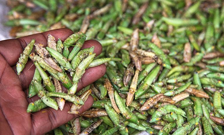 Кузнечики на рынке в Уганде