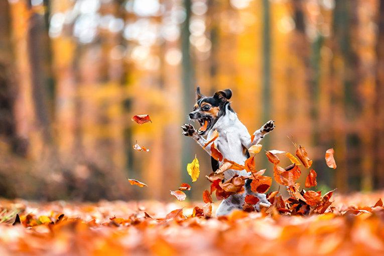 Безумно влюблен в осень (Crazy in love with fall)