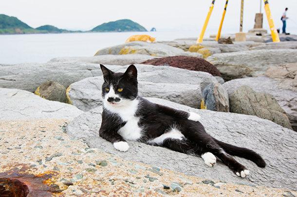 Котомодель (Cat Model)