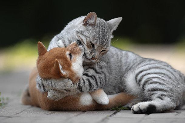 Объятия любви (Embrace of love)
