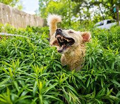 Лай юрского пириода (Jurassic Bark)