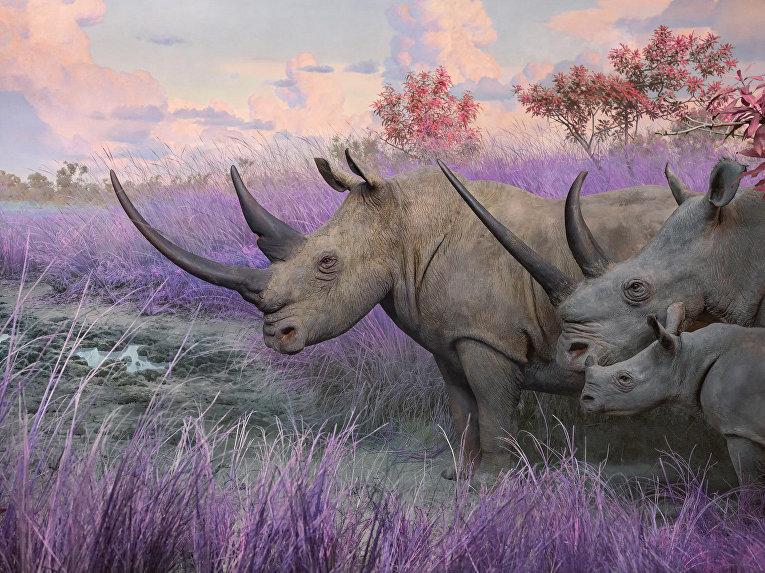 Индийские носороги