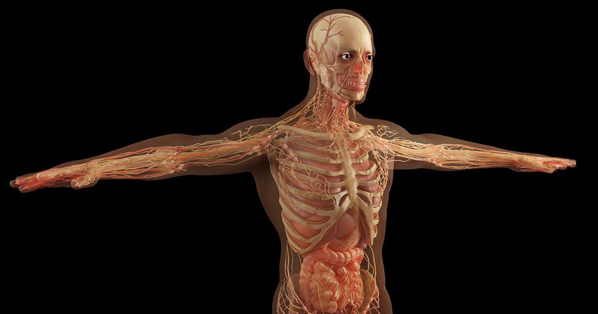 Sohu (Китай): когда органы начинают стареть Вот и способ замедления старения организма! (Sohu)
